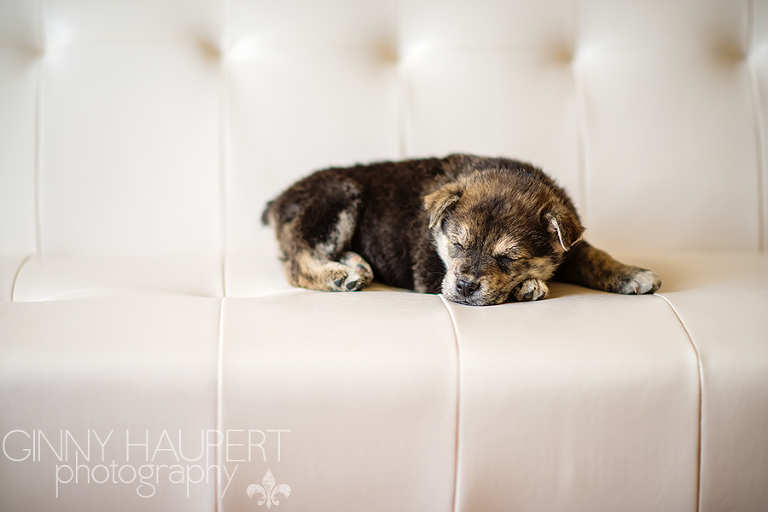 Colorado Puppy Rescue Archives Denver Beauty And Boudoir Photographer